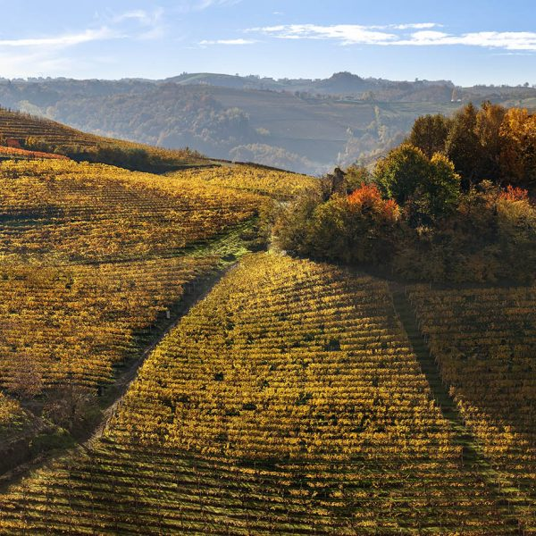 altre_vigne